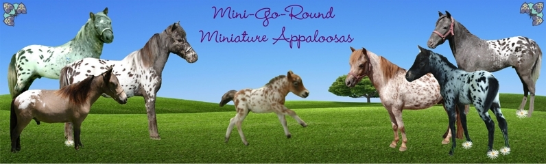 Appaloosa Minis For Sale